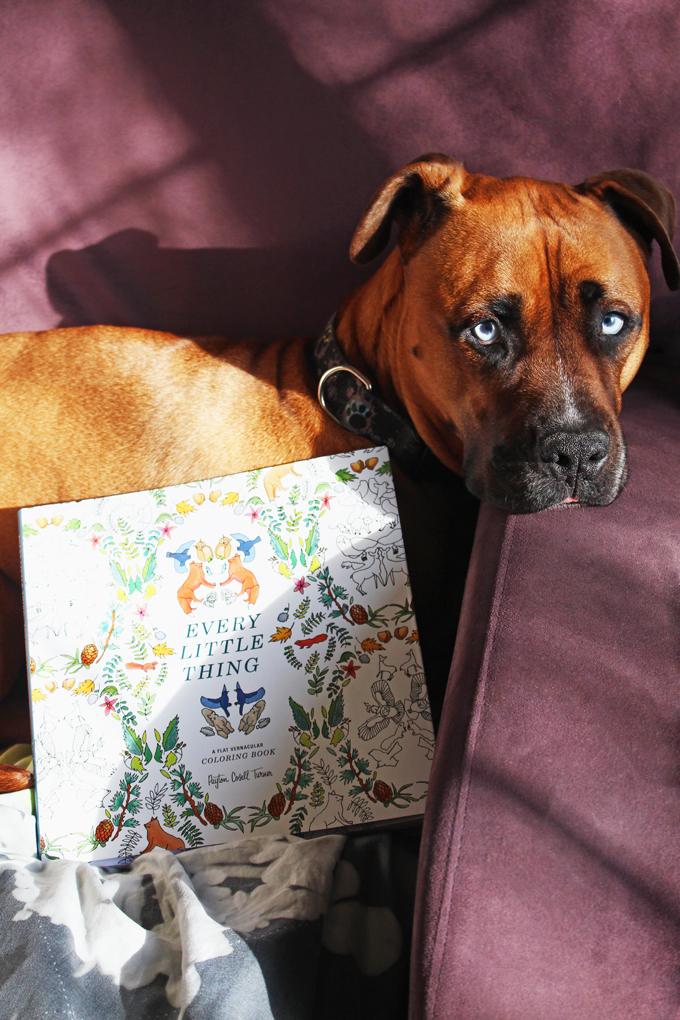 Every Little Thing is fabulously quirky coloring book that has lovely pictures often dealing with animals, plants, & 1980s inspired items. Check out more on Home in High Heels!