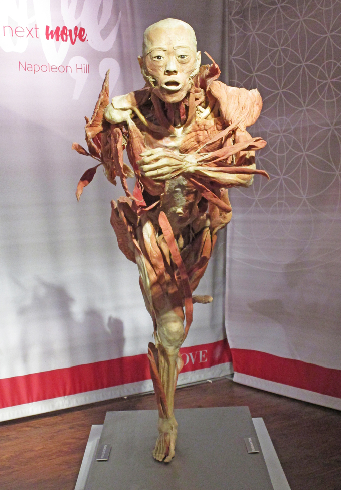 Check out our thoughts on the Real Bodies Exhibit at Bally's Las Vegas on Home in High Heels