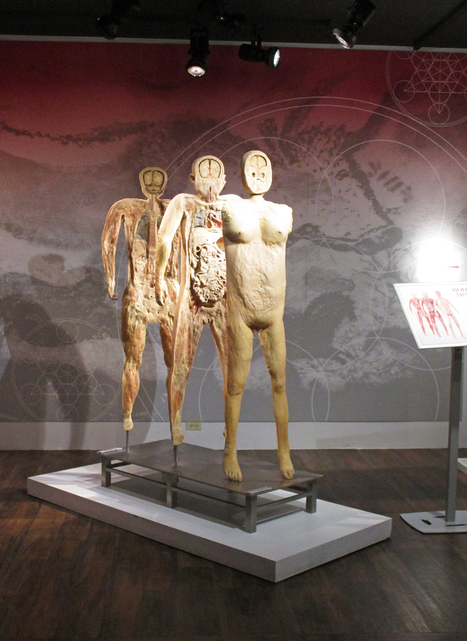 With a name like Bodies in Las Vegas, it's easy to assume you're going to a topless show. But Bodies The Exhibition at the Luxor is even more revealing. Bodies will easily trump any science lab dissection you've done in school.5/5(51).
